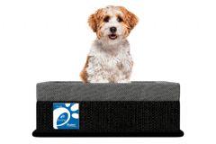 Colchão Box Probel Pet Plus p/ Cães e Gatos